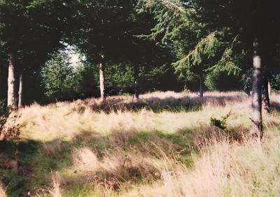 Whitethorn  Residential Lots & Land For Sale: 221 Debbie Lane