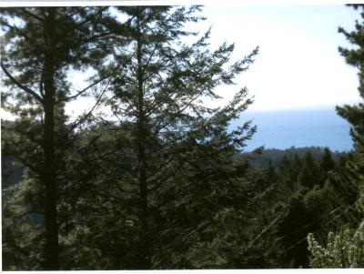 Whitethorn  Residential Lots & Land For Sale: 221 Muskrat Circle