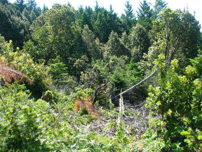 Whitethorn  Residential Lots & Land For Sale: 236 Forest Road