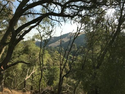 Martinez Residential Lots & Land For Sale: Millican Ct
