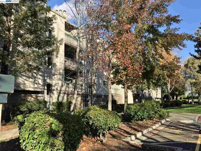 Hayward Condo/Townhouse For Sale: 1280 Stanhope Ln #242