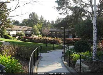 Walnut Creek Rental For Rent: 235 Masters Ct #2
