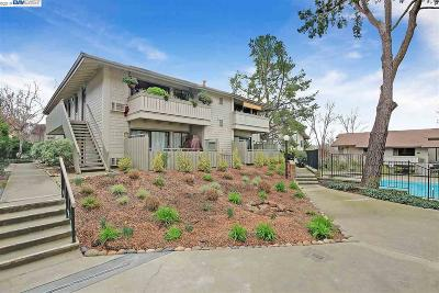 Walnut Creek Condo/Townhouse New: 1437 Marchbanks Dr. #7