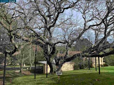 Walnut Creek Rental New: 1621 Ptarmigan Dr #2B