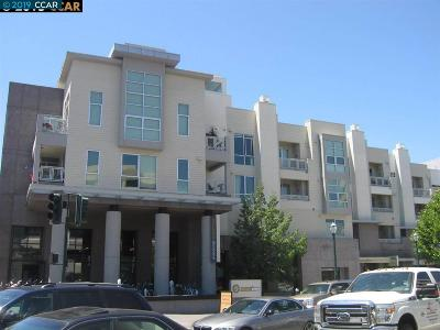Contra Costa County Rental For Rent: 1655 N California Blvd #303