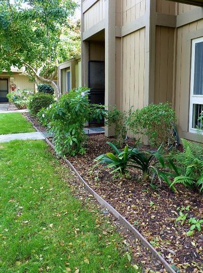 Alameda Condo/Townhouse For Sale: 3163 Fiji Lane