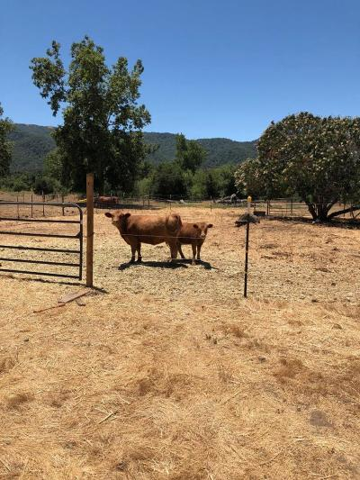 Gilroy Residential Lots & Land For Sale: 8177 Burchell Road