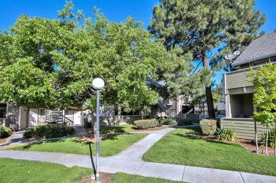 San Jose Condo/Townhouse For Sale: 520 Shadowgraph Drive