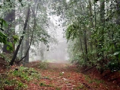 Santa Cruz Residential Lots & Land For Sale: Boony Doon Road