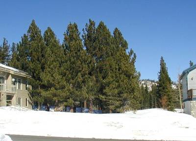 Mammoth Lakes Residential Lots & Land For Sale: 92 Ridge Way