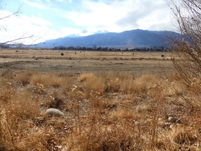 Big Pine, Bishop Residential Lots & Land For Sale: 3134 Indian Creek