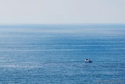 San Diego Single Family Home For Sale: 1207 Trieste