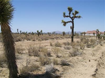 Apple Valley Residential Lots & Land For Sale: Ocotillo Way