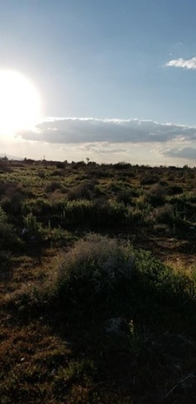 Hesperia Residential Lots & Land For Sale: Hesperia Road