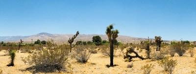 San Bernardino County Residential Lots & Land For Sale: 1 Wren Street