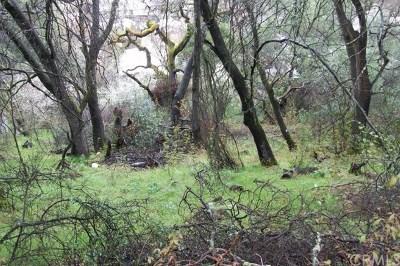 Clearlake Oaks Residential Lots & Land For Sale: 12537 Widgeon Way