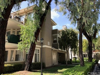 Orange County Rental For Rent: 23412 Pacific Park Drive #2D