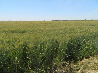 Tulare Residential Lots & Land For Sale: 16635 Road 128