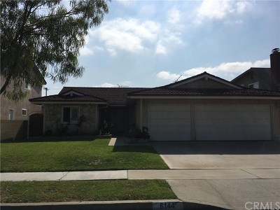 Lakewood Single Family Home For Sale: 6144 Faust Avenue