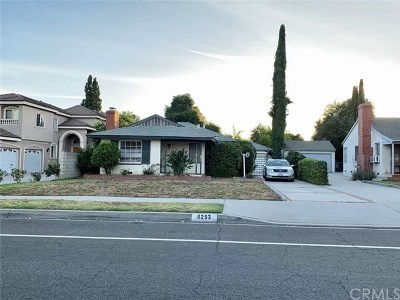Temple City Single Family Home Active Under Contract: 6253 N Muscatel Avenue