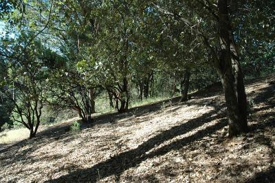 Grass Valley CA Residential Lots & Land For Sale: $59,000