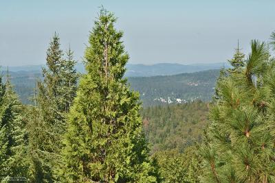 Nevada City Single Family Home For Sale: 11385 Caroline Lane