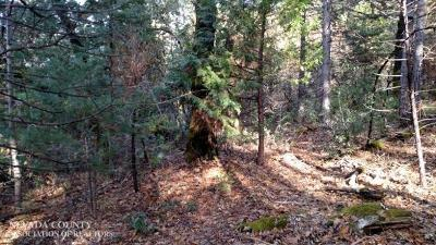 Nevada City CA Residential Lots & Land Pending: $75,000