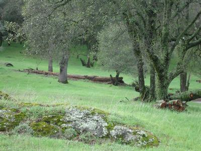 Grass Valley Residential Lots & Land For Sale: 17378 Brewer Road
