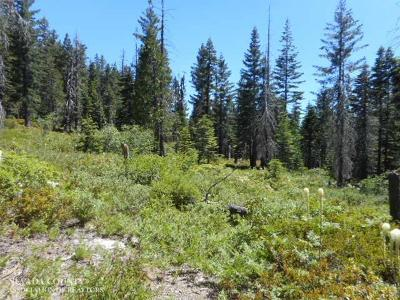 Nevada City CA Residential Lots & Land For Sale: $188,000