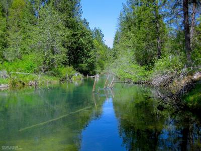 Nevada County Residential Lots & Land For Sale: 10840 Mill Springs Drive