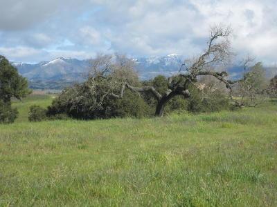 Ballard, Buellton, Los Alamos, Los Olivos, Santa Ynez, Solvang Residential Lots & Land For Sale: 1228 Alamo Pintado Road