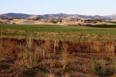 Santa Ynez Residential Lots & Land For Sale: 4200 Roblar Avenue