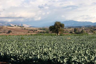 Santa Ynez Residential Lots & Land Active Under Contract: 4130 Roblar Avenue