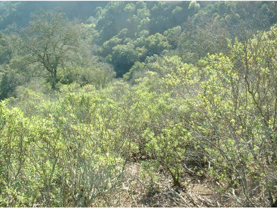 MORGAN HILL Residential Lots & Land For Sale: 0 Armsby Ln