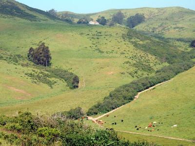 San Gregorio Single Family Home For Sale: 6090 Stage Rd