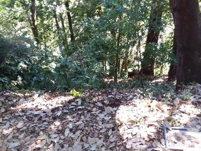 Santa Cruz County Residential Lots & Land For Sale: 00 00 Whilaway Ave