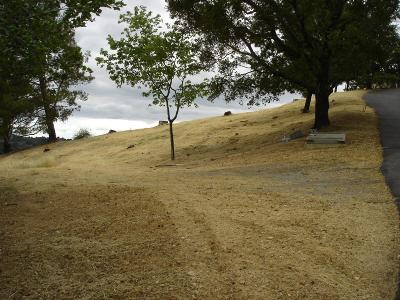 CUPERTINO CA Residential Lots & Land For Sale: $1,750,000