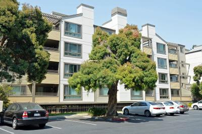 Cupertino, Sunnyvale Condo For Sale: 1269 Poplar Ave 201