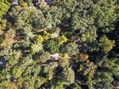Portola Valley Single Family Home For Sale: 245 Bonita Rd