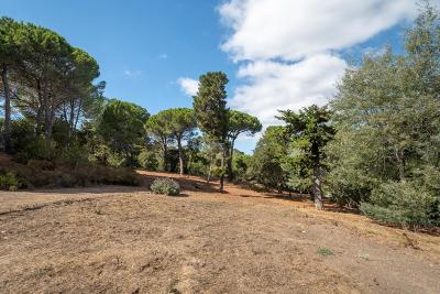 HILLSBOROUGH Residential Lots & Land For Sale: 77 New Place Rd