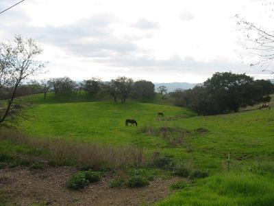 Gilroy Residential Lots & Land For Sale: 8655 Leavesley Rd