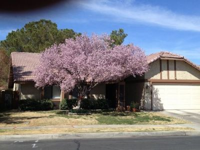 Inyo County, Kern County, Tulare County Single Family Home For Sale: 1243 Mt. View Dr.