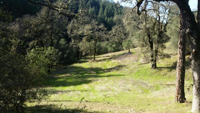 El Dorado County Commercial Lots & Land For Sale: 3581 State Highway 193