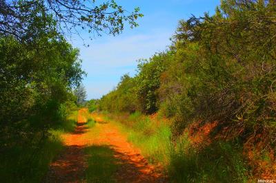 Garden Valley Residential Lots & Land For Sale: 6400 Mount Murphy Road