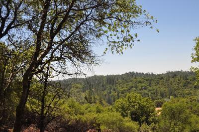 Sutter Creek Residential Lots & Land For Sale: 14190 Shake Ridge Road