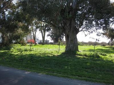Sacramento County Commercial Lots & Land For Sale: 10250 Arno Road