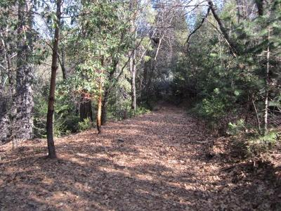 Placerville Residential Lots & Land For Sale: 6222 Pine Needle Lane