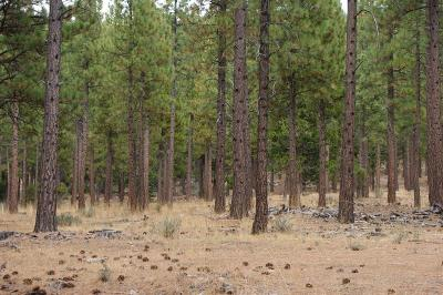 Plumas County Residential Lots & Land Active Short Sale: Highway 89