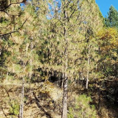 El Dorado County Residential Lots & Land For Sale: 5255 Humbug Road