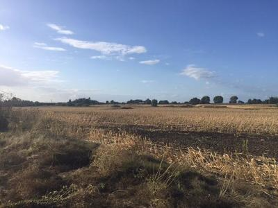 Sacramento County Commercial Lots & Land For Sale: 15687 Isleton Road